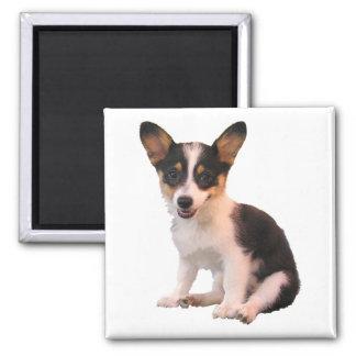 Sitting Cardigan Welsh Corgi Puppy 2 Inch Square Magnet
