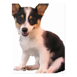 Sitting Cardigan Welsh Corgi Puppy Postcard