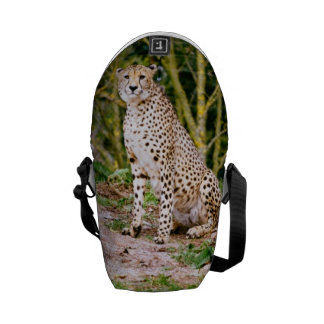 Sitting Cheetah Portrait Courier Bags