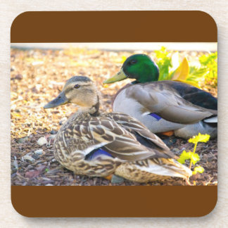Sitting Ducks Coasters