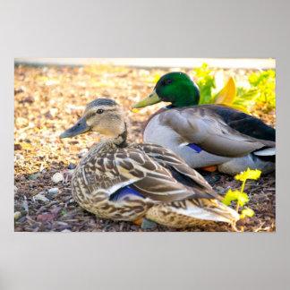 Sitting Ducks - Poster
