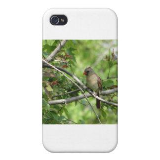 Sitting Female Cardinal iPhone 4 Case
