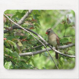Sitting Female Cardinal Mouse Pad