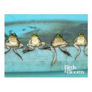 Sitting Frogs Postcard
