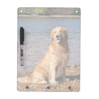 Sitting Golden Retriever Color Dry Erase Board