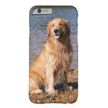 Sitting Golden Retriever iPhone 6 case iPhone 6 Case