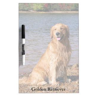 Sitting Golden Retriever Medium Dry Erase Board