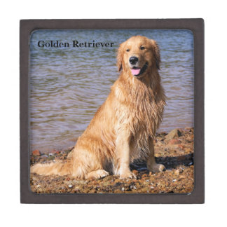 Sitting Golden Retriever Premium Trinket Box