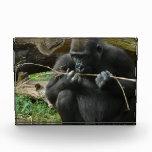 Sitting Gorilla Award