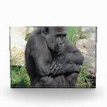 Sitting Gorilla Awards