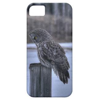 Sitting Great Gray Owl Wildlife Photo Portrait III iPhone SE/5/5s Case