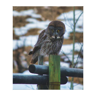 Sitting Great Grey Owl and Ranch Fence Post 2 Canvas Print