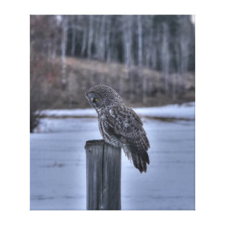 Sitting Great Grey Owl and Ranch Fence Post Canvas Print