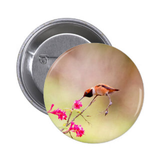Sitting Hummingbird Sipping Flower Nectar Pinback Buttons