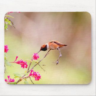 Sitting Hummingbird Sipping Flower Nectar Mouse Pad