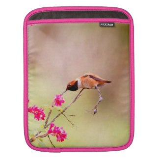 Sitting Hummingbird Sipping Flower Nectar Sleeve For iPads
