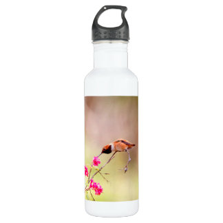 Sitting Hummingbird Sipping Flower Nectar Stainless Steel Water Bottle
