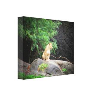 Sitting Lioness by DJONeill Canvas Print