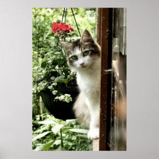 Sitting on a Windowsill Poster