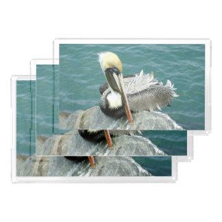 Sitting Pelican Acrylic Tray