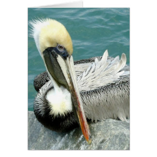 Sitting Pelican Card
