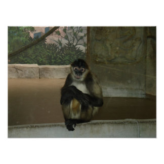 Sitting Pretty at the Zoo Poster