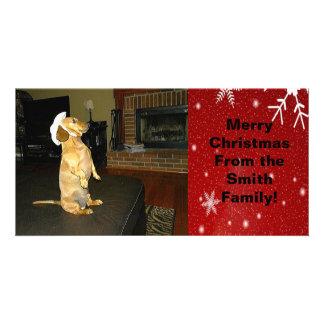 Sitting Pretty Dachshund Christmas Photo Card