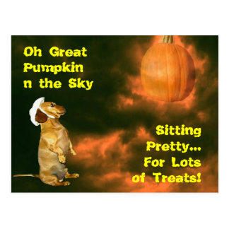 Sitting Pretty For Lots of Treats Postcard