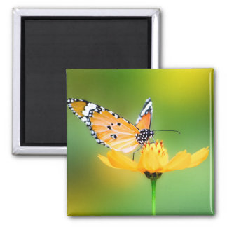 Sitting Pretty Little Butterfly on a Flower Refrigerator Magnet