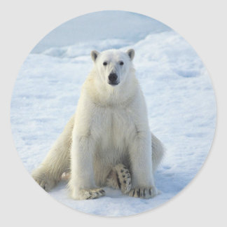 Sitting Pretty Polar Bear Classic Round Sticker