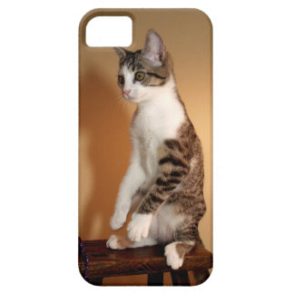 Sitting Pretty Upright Cat iPhone SE/5/5s Case