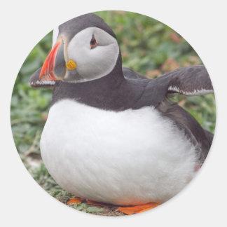 Sitting Puffin on Skomer Island Round Sticker