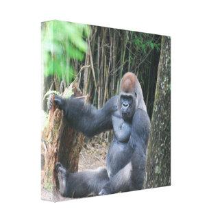 Sitting Silverback Gorilla  Canvas Print