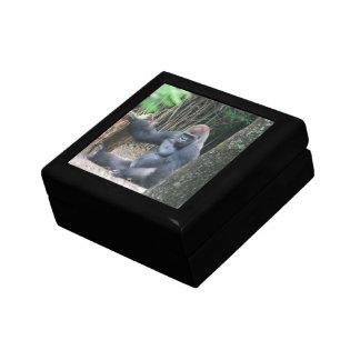 Sitting Silverback Gorilla  Gift Box