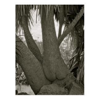 Sitting Tree Postcard