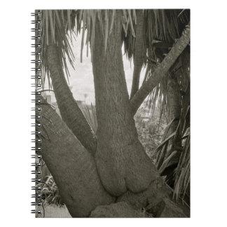 Sitting Tree Spiral Notebook