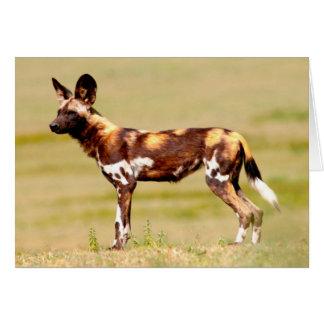 Situación africana del perro salvaje Lycaon Tarjeta