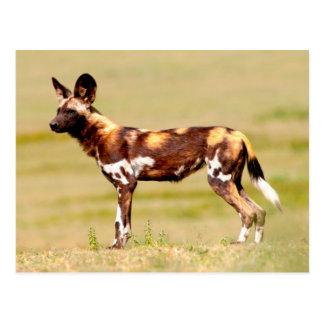 Situación africana del perro salvaje (Lycaon Postal
