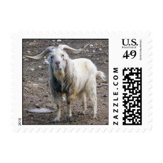 Situación blanca de la cabra sello