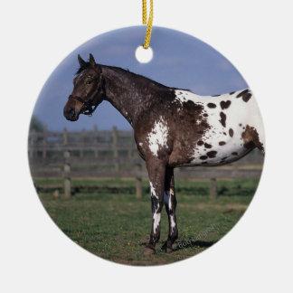 Situación del caballo del Appaloosa Adorno Redondo De Cerámica