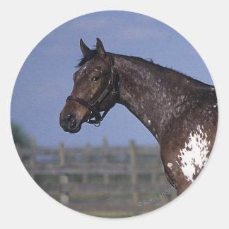 Situación del caballo del Appaloosa Pegatina Redonda