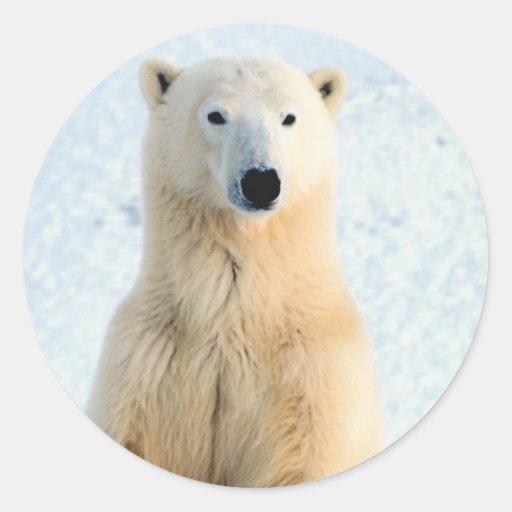 Situación del oso polar pegatina redonda