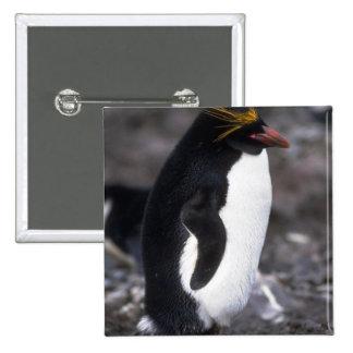 Situación del pingüino de los macarrones erguida