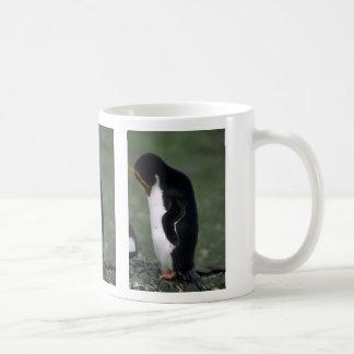 Situación del pingüino de los macarrones erguida tazas de café