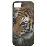 Situación del tigre (Panthera el Tigris), primer Funda Para iPhone SE/5/5s