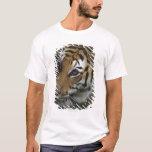 Situación del tigre (Panthera el Tigris), primer Playera