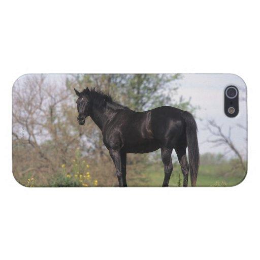 Situación excelente del caballo iPhone 5 carcasas