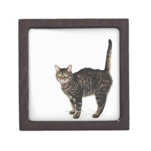 Situación masculina nacional del gato de tabby caja de regalo de calidad