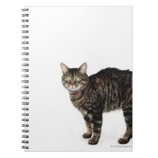 Situación masculina nacional del gato de tabby libros de apuntes con espiral