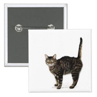 Situación masculina nacional del gato de tabby pins